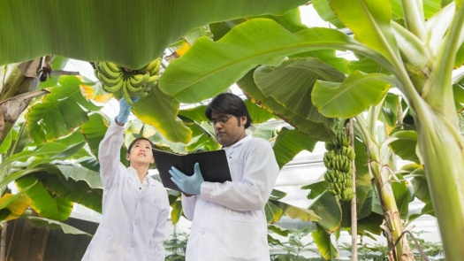 Curso agroindustria del Plátano